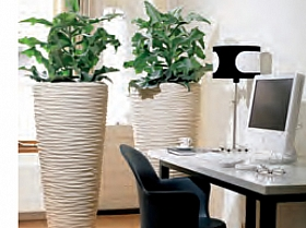 planta-naturala-in-ghiveci-plants-first-choice-polystone-70834-1