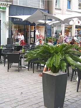 planta-naturala-ghiveci-lechuza
