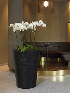 planta-naturala-orhidee-in-ghiveci-natural