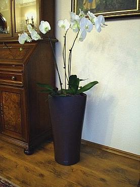 orhidee-in-ghiveci-lechuza