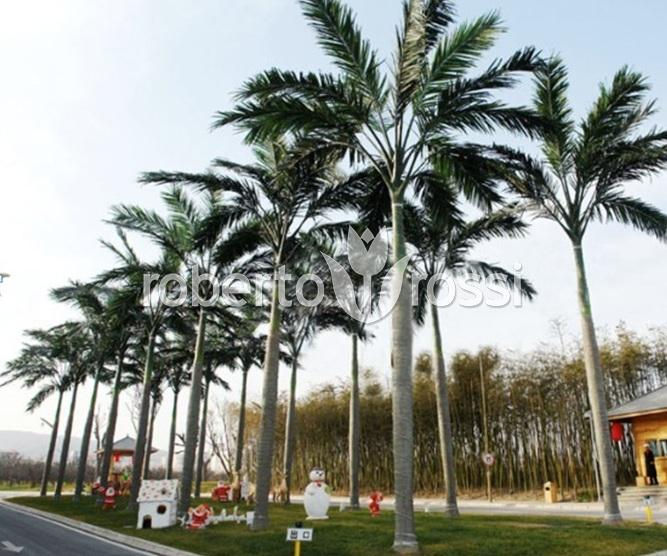 palmieri-artificiali-amenajari-plaja-terasa