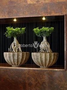 bonsai-in-ghiveci-ceramic