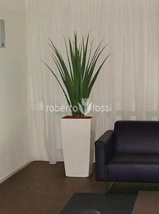 plante-decorative-apartament