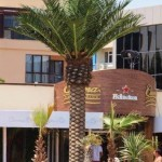 palmieri artificiali de exterior