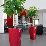 planta-naturala-pachira-in-ghiveci-lechuza-diamant