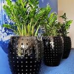 planta-naturala-zamioculcas-in-ghiveci-ceramic