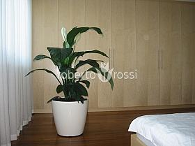 spathiphyllum-gokyo-65-cm-905-3