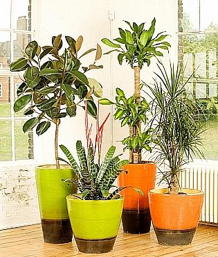 ghivece ceramice pentru plante de apartament