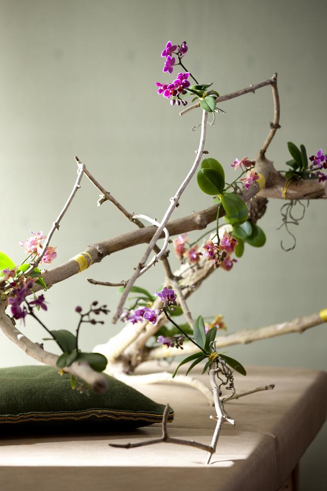 Aranjament cu Orhidee si crengi contorsionate