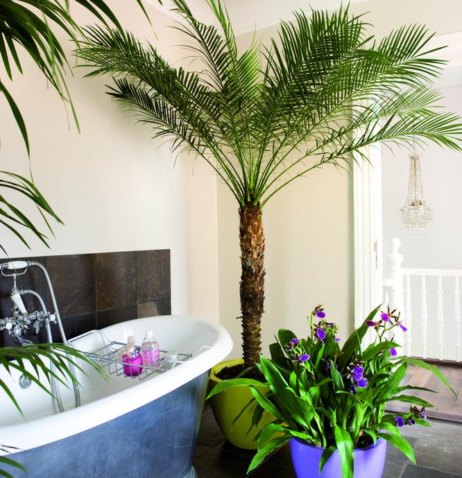 Baie cu palmieri si orhidee