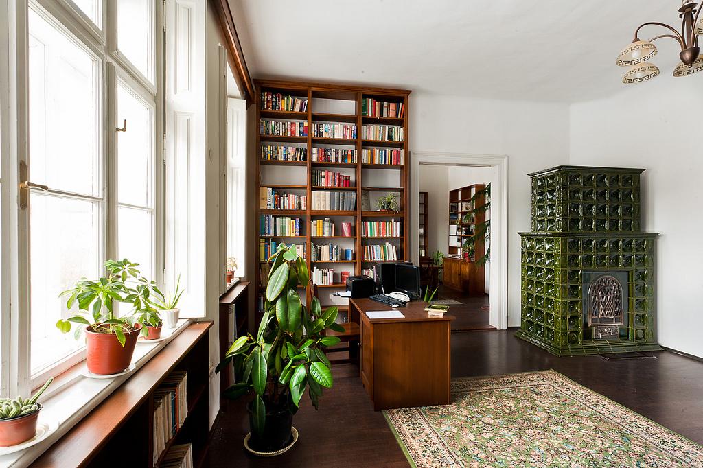Ficusi pentru aer curat in camera