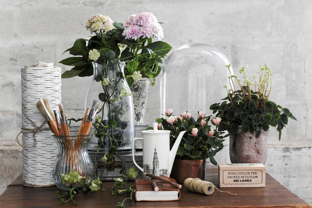 Flori frumoase si sanatoase