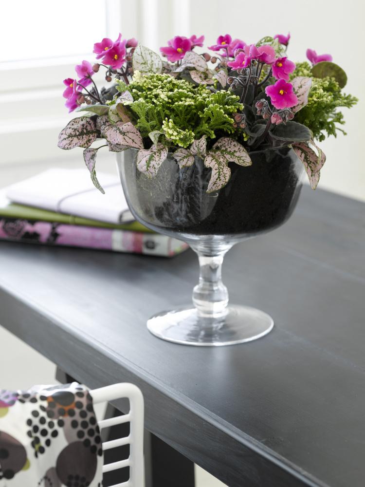 Aranjament cu Violete si plante companion