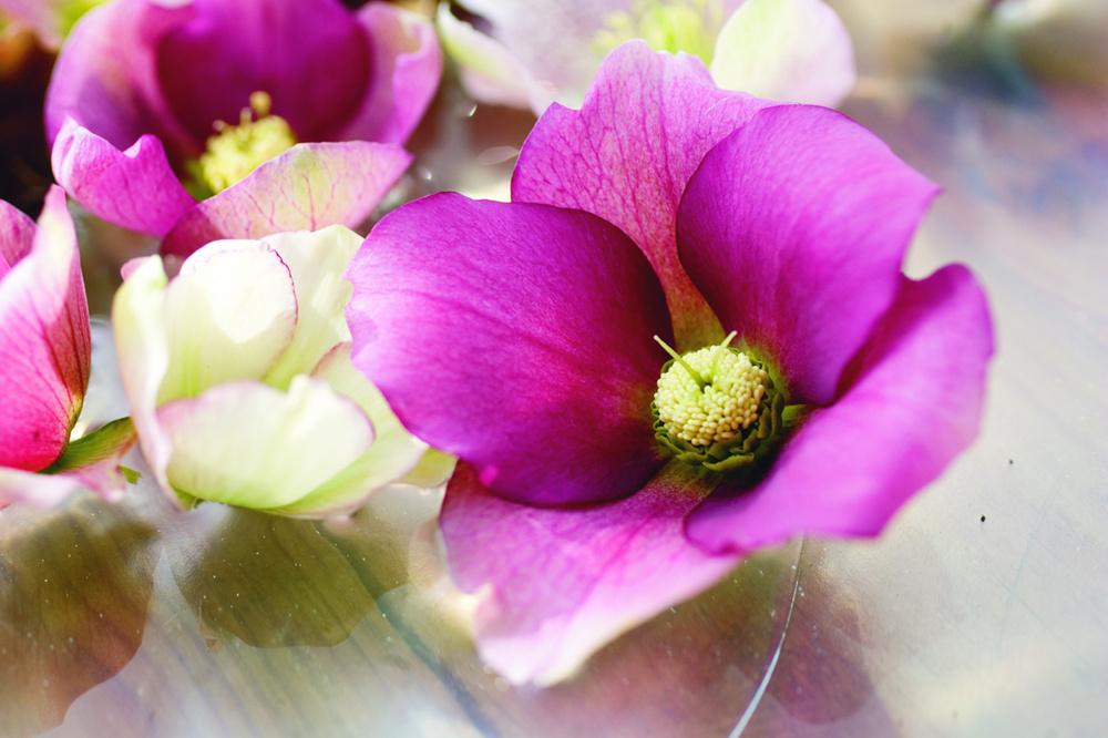 Flori de Spanz hibrid