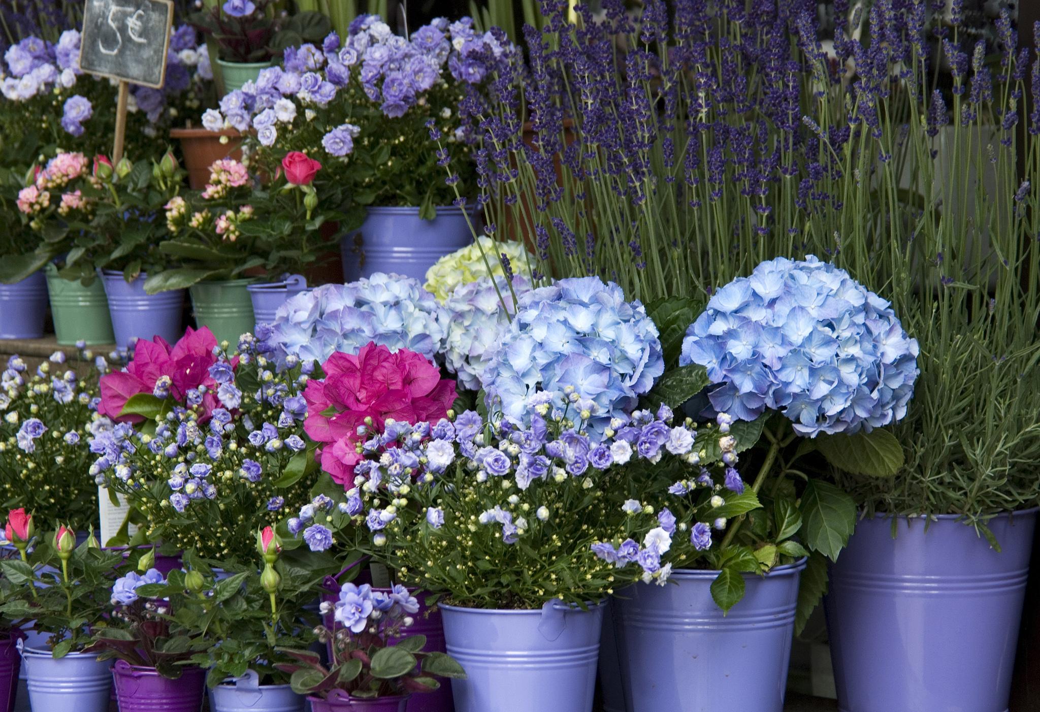 Flori la ghiveci