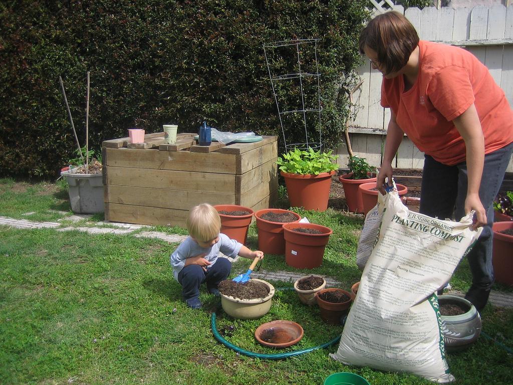 Transplantarea plantelor din curte