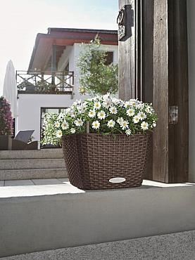 planta-naturala-cu-flori-in-ghiveci-lechuza-bacino