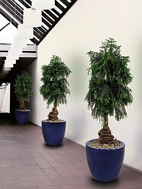 planta-naturala-ghiveci-ceramic