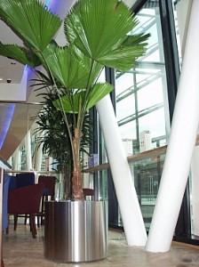 palmier-artificial-in-ghiveci-horeca