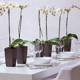 orhidee-artificiala-in-ghiveci
