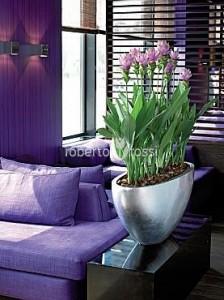 amenajari-decoratiuni-plante-apartament