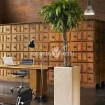 arbust-ornamental-pachira-ghiveci-polystone