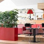 planta-naturala-scheflera-arboricola