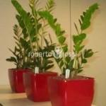 planta-zamioculcas-ghiveci-lechuza