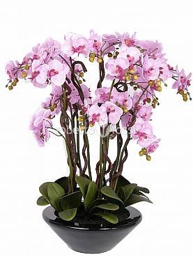 Phalaenopsis, Orhidee artificiala