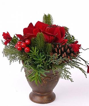 amaryllis-pinecone-berry-25-cm-amaryllis-con-de-brad-berry-31396-1