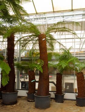 plante de ghiveci sau de gradina