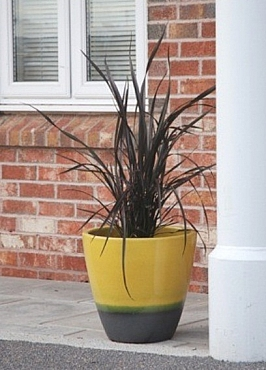 planta-naturala-in-ghiveci-ceramic-rotund-rainbow-50x40-cm-71395-1