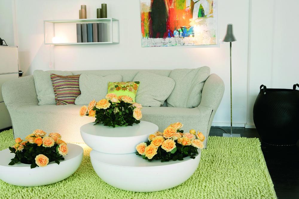 Casa moderna decorata cu trandafiri