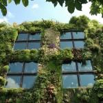 Vrei și tu o grădină verticală?
