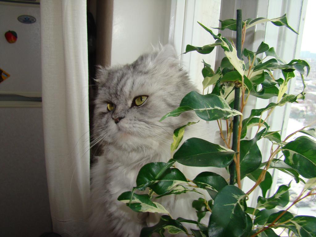 Si animalelor de companie le plac plantele