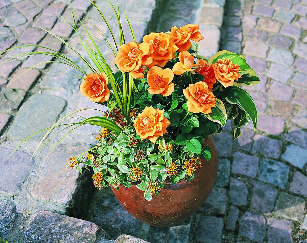 Aranjament cu flori naturale la ghiveci