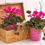 Cum alegi ghivecele potrivite pentru plantele tale?