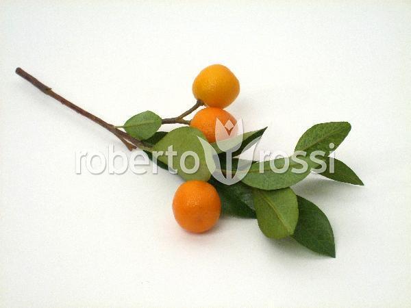 kumquat-ho-93528-1