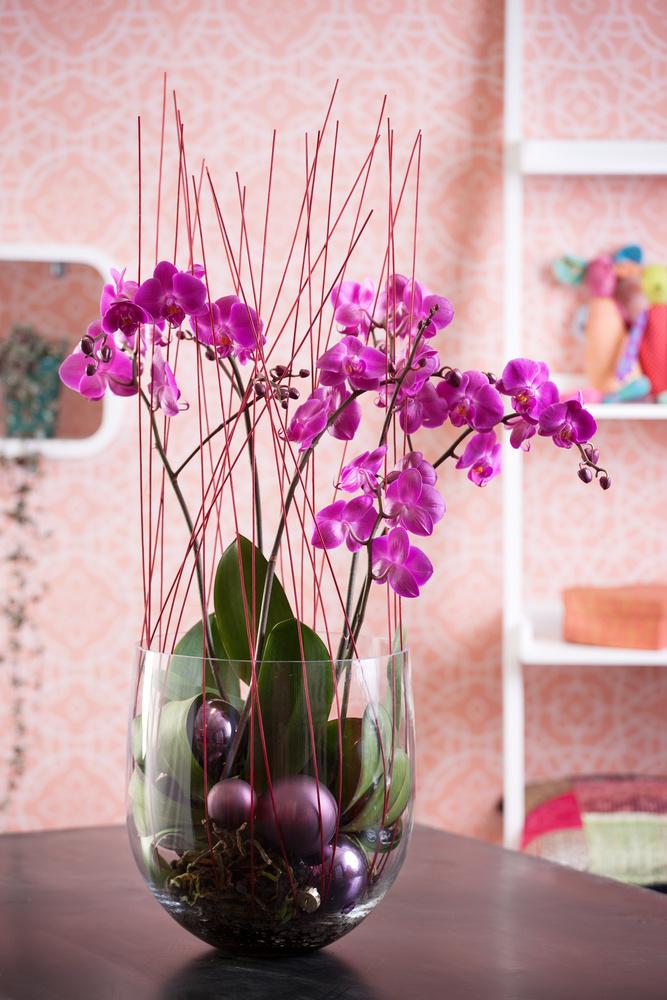 Bol cu orhidee Phalaenopsis din globulete colorate