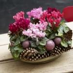 Eşti gata să lucrezi la aranjamentele decorative pentru sezonul de iarnă?