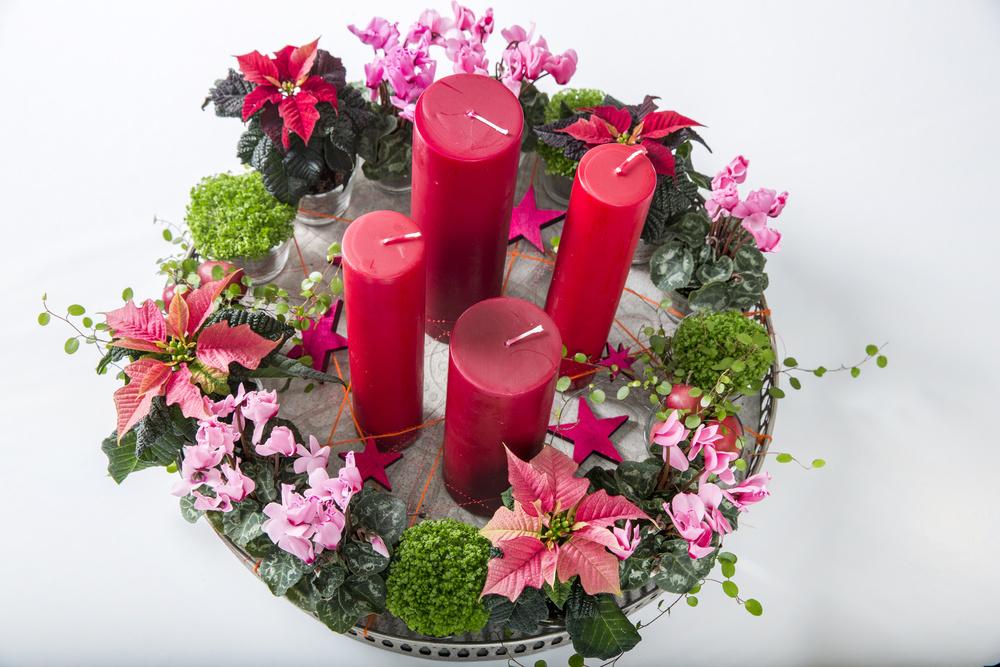 Platou cu Poinsettia si Cyclamen