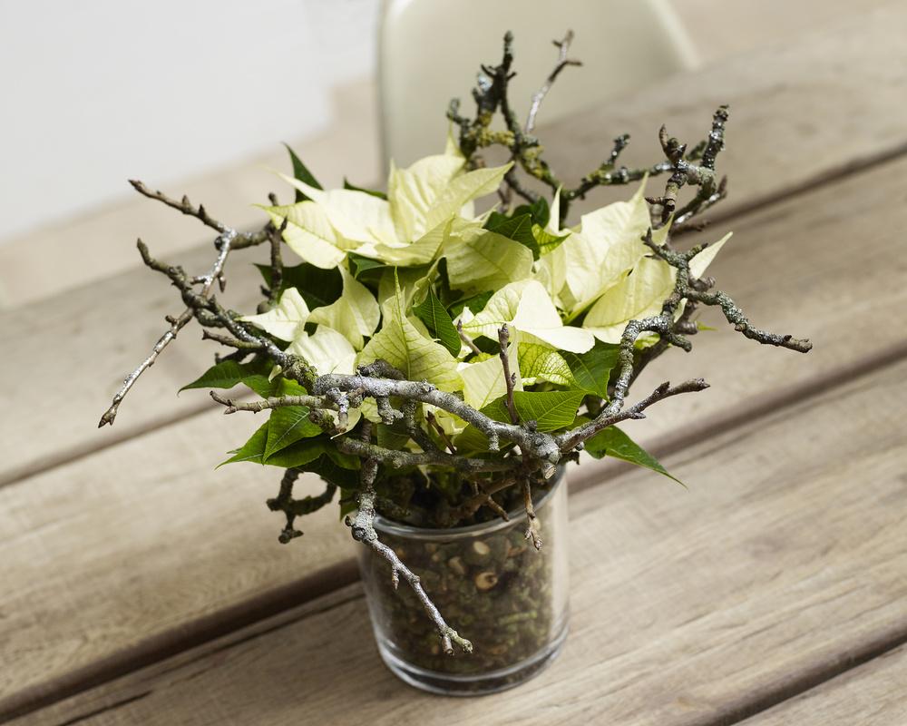 Aranjament cu Poinsettia si crengute in vas transparent