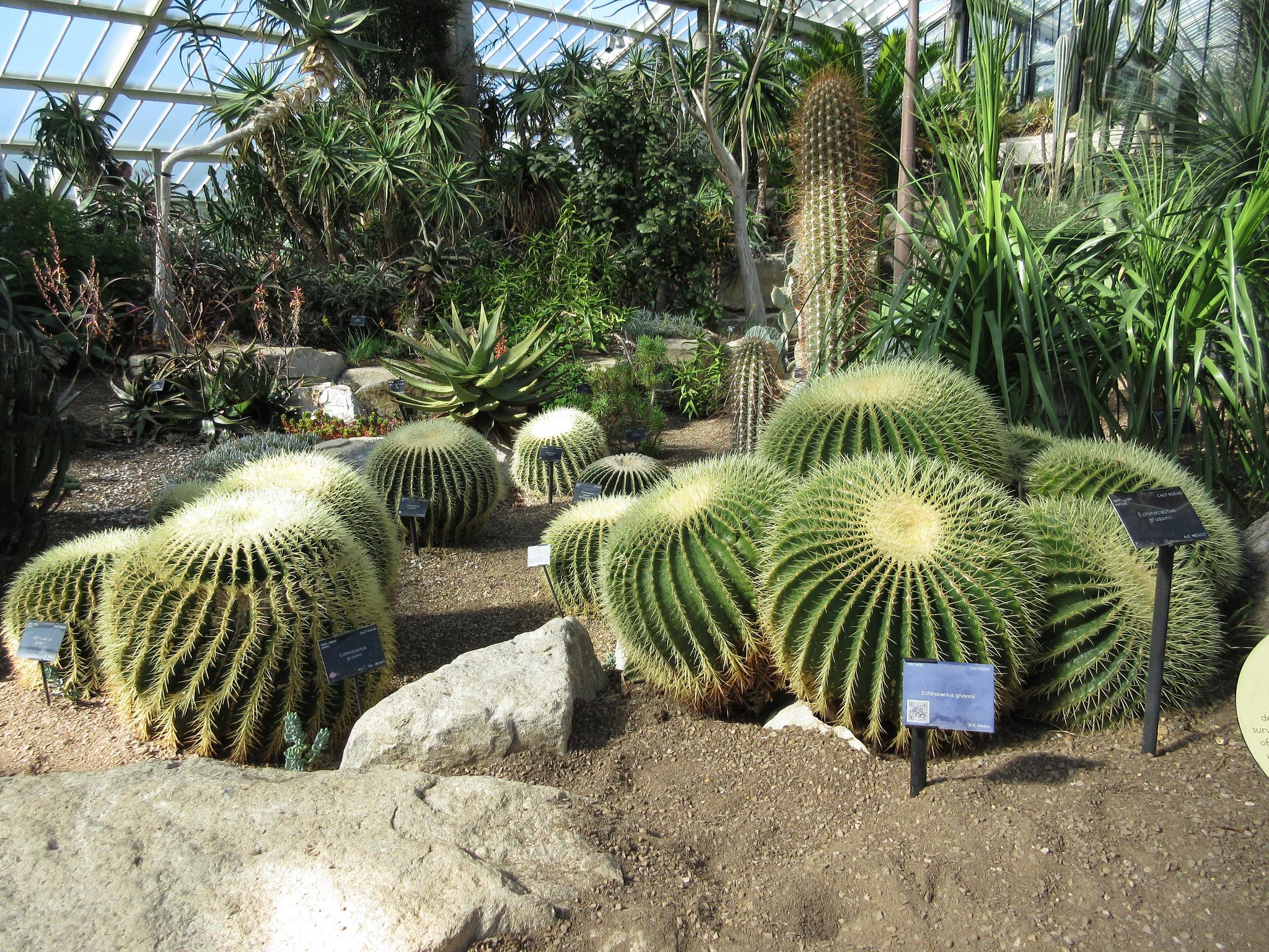Cactusi in ecosistem