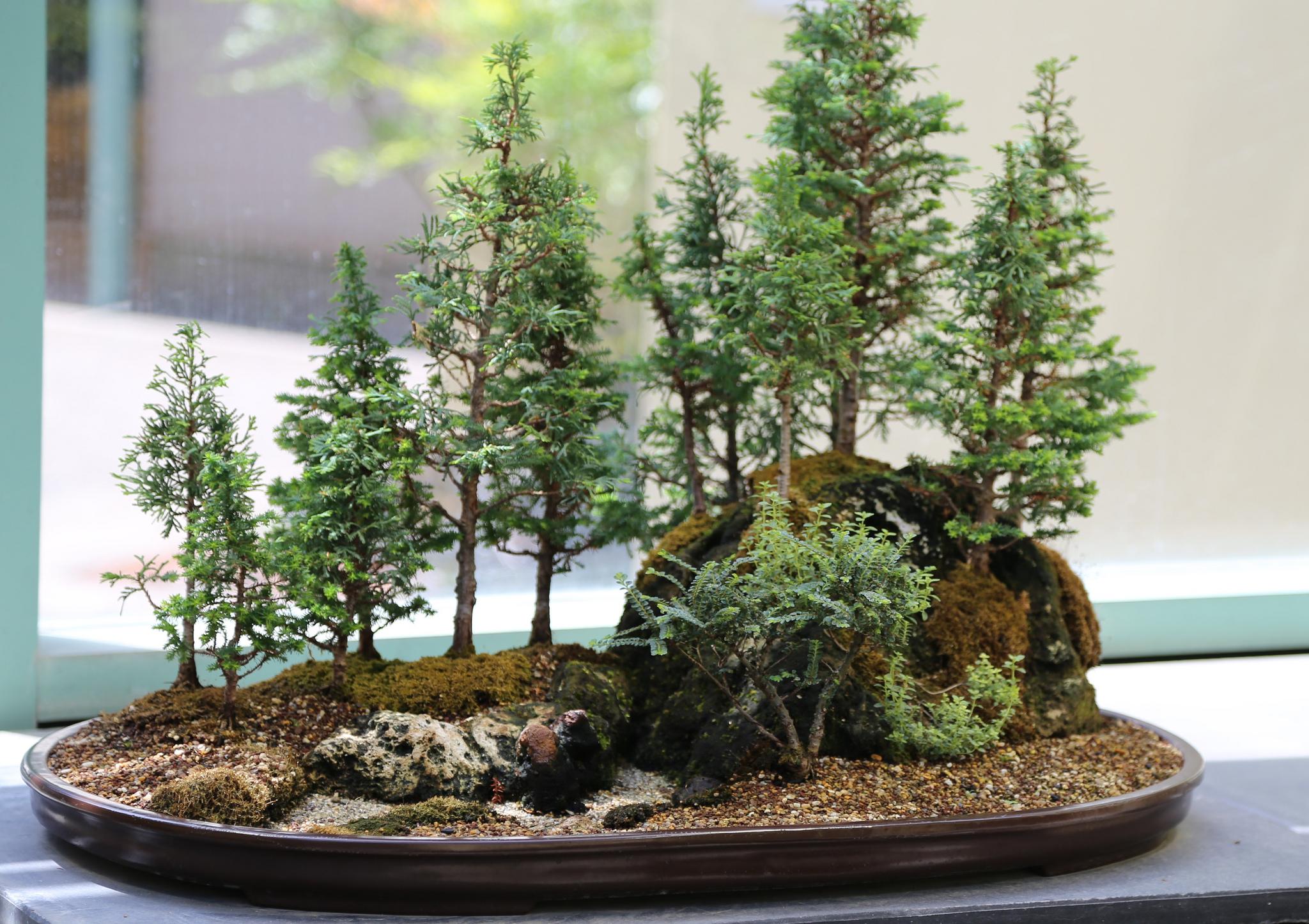 Padure miniaturala