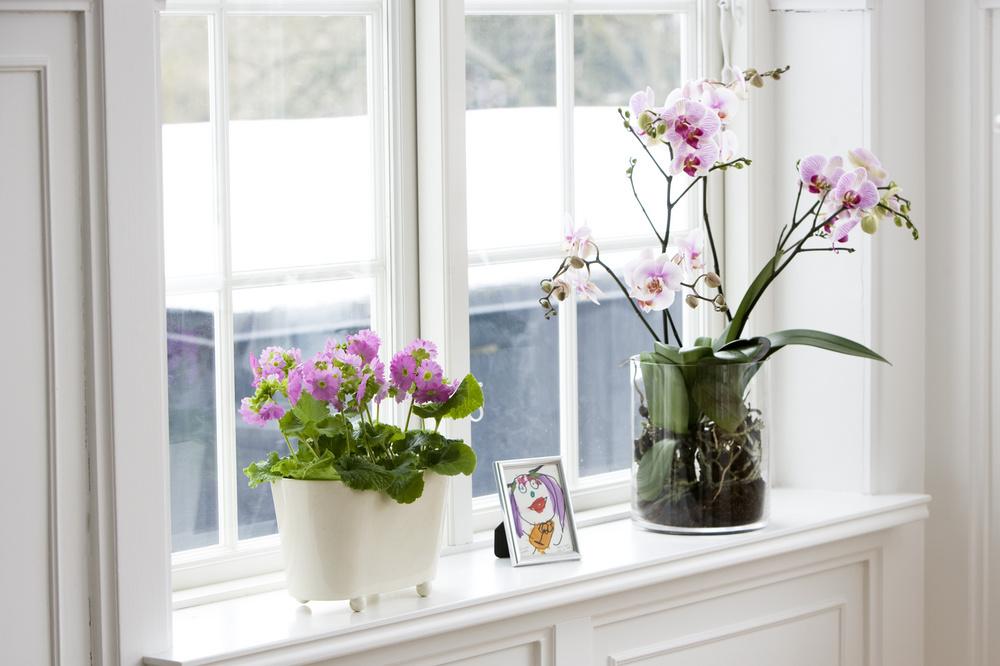 Bol rafinat pentru orhidee si minijardiniera cu rotite