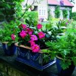 Cum protejezi plantele de interior scoase afară în sezonul de primăvară-vară?