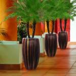 Idei de amenajare a biroului – plantele verzi si efectul benefic la birou