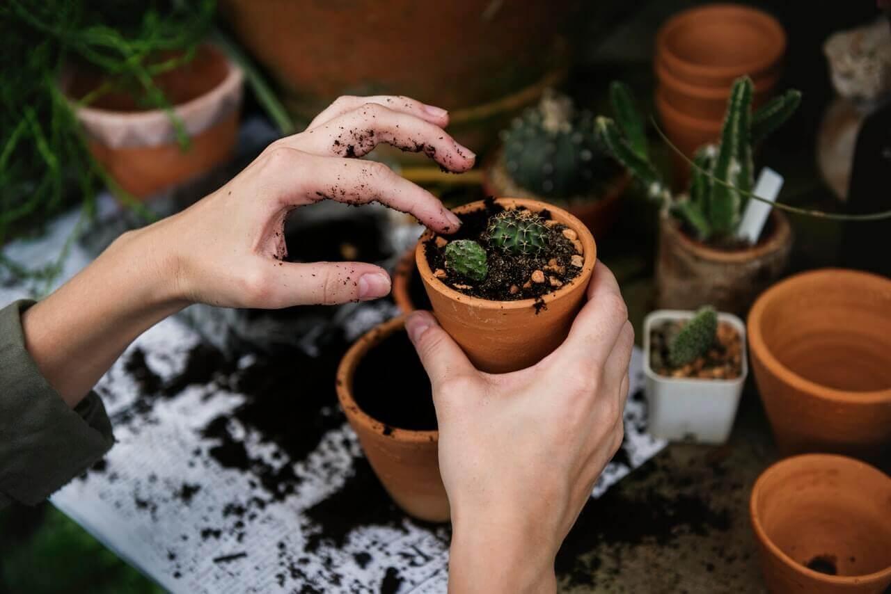 Substrat recomandat pentru plantele sugative