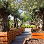 Copacii de apartament: cum alegi tipurile potrivite