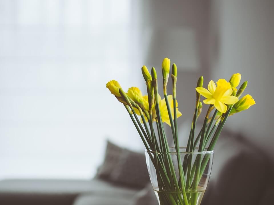 Narcise in vaza